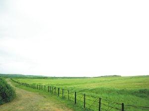 籠仔埔大草原
